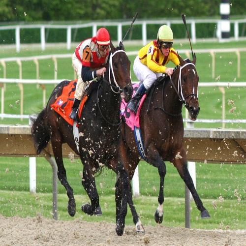 """ Auspicious Time Horse Races by best Astrologer and Vastu consultant in Pune, India"""